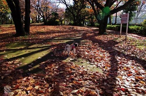 01.枯れ葉散歩.jpg