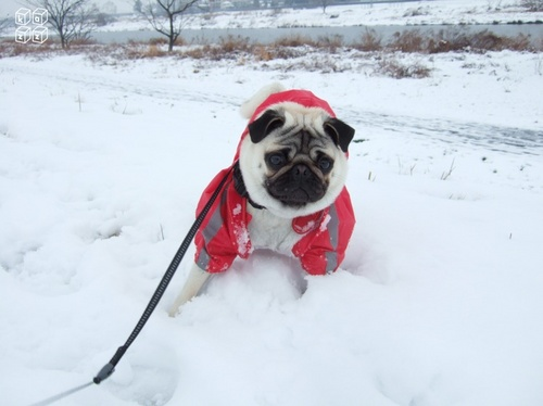 17.雪散歩.jpg